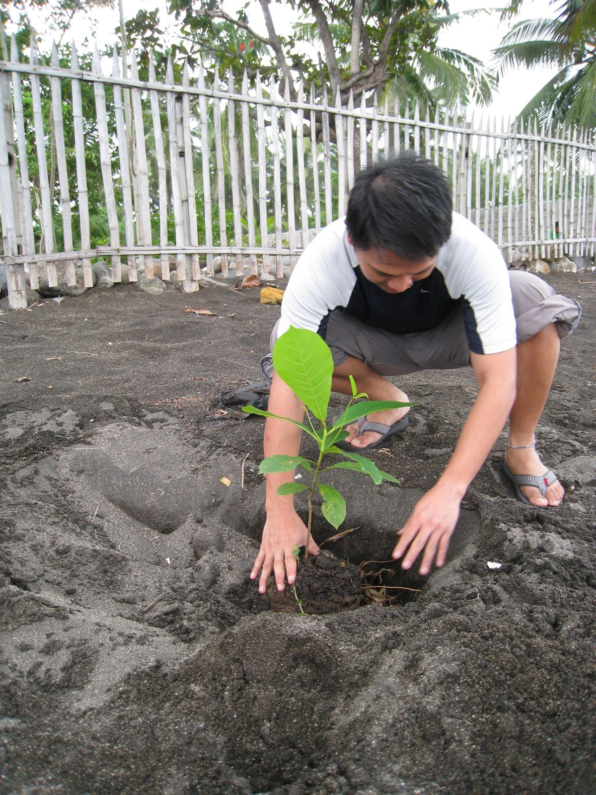 General Tips for Tree Planting – Institute of Environmental Science