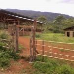 carp shed and bodega at the back